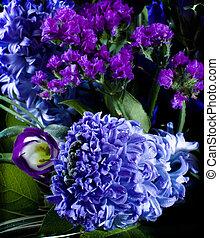 deep violet hyacinthus orientalis