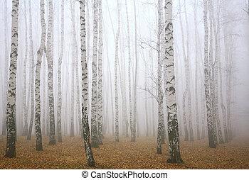 Deeply mist in the autumn birch forest