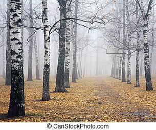 deeply, parc, automne, bouleau, brume, chemin