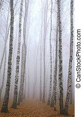 deeply, parc, matin, automne, bouleau, brume, chemin
