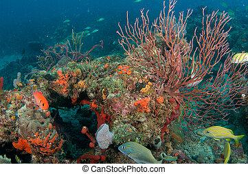 Deepwater Sea Fan on a coral reef.