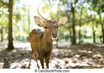 Deer at outdoor
