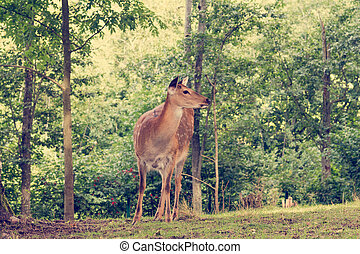 Deer at the edge of a forest