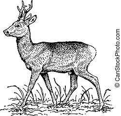 Deer - Beautiful deer standing on the ground