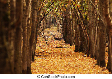 deer doe in autumn forest