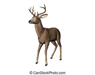 Deer - Isolated deer