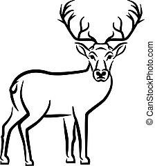Deer Drawn