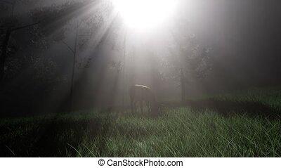 Deer Female in Forest in Fog - deer female in forest in fog...
