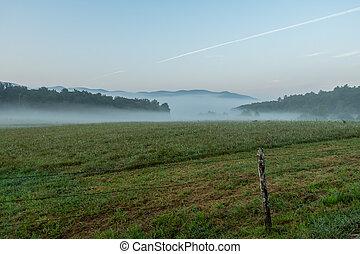 Deer Graze In Morning Fog