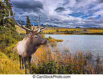 Deer graze on the shore of a lake
