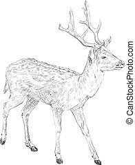 Deer, hand drawn