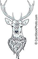 Deer Head - Head of a male deer in hand drawn style...