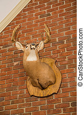 Deer Head Mounted on Brick Wall
