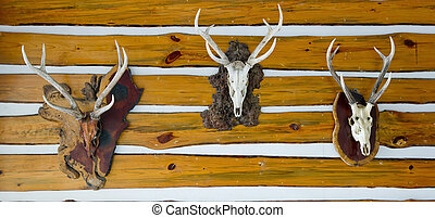Deer head trophy collection on a wooden wall