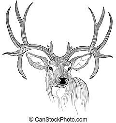 Deer head vector animal illustration for t-shirt. Sketch...