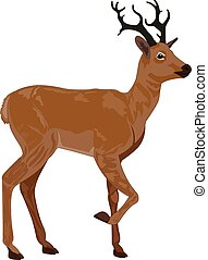 Deer, Buck, Brown, Male, vector illustration