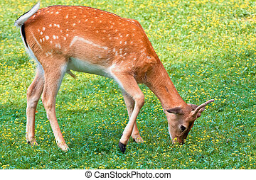 Deer in on a spot of grass in the forest