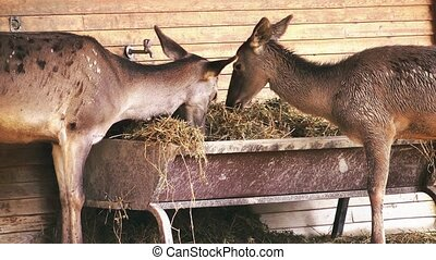 Deer in the Barn