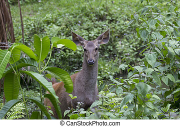 Deer in the bush