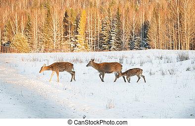 Deer in the Park