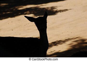 Deer in the Shadow - Deer