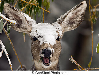 deer in the snow - a deer with snow on its head