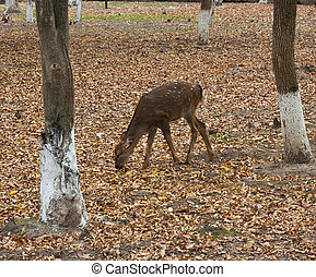 deer in the zoo