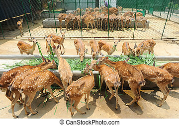 Deer in the zoo