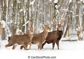 Deer in winter forest
