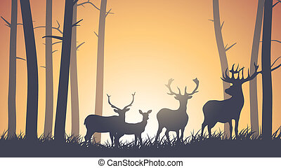 Deer in wood at sunset.