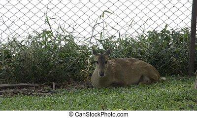 deer in zoo - deer in public zoo footage