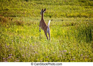 Deer jumping in Field