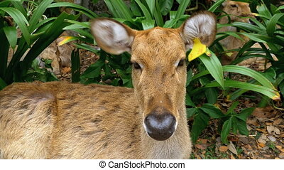 Deer lying in the bushes
