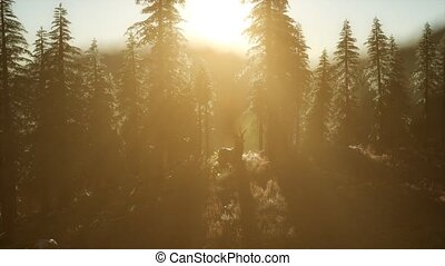 Deer Male in Forest at Sunset - deer male in mountain forest...