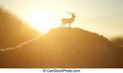 Deer Male in Forest at Sunset