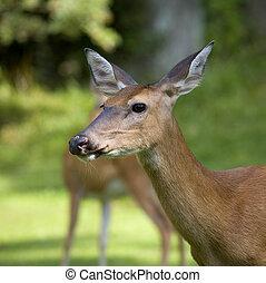 deer near the forest