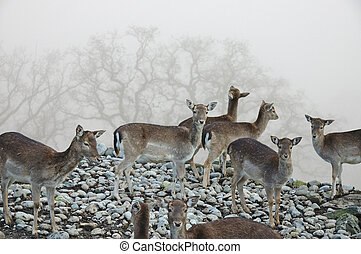 Deer on Foggy Mountain Trail