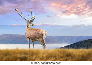 Deer on mountain background - Close up deer on mountain ...