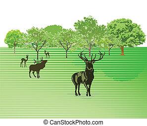 Deer on the green meadow