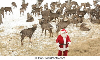 Deer party - Cool Santa Claus dancing on a deer farm