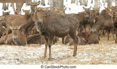 Deer pasture
