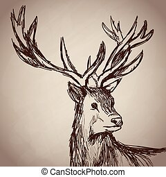 deer portrait forest hand drawing vintage