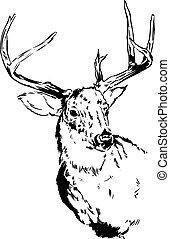 Deer / Reindeer - An original pen and ink illustration of a...