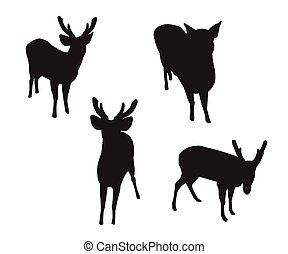 Deer Set Silhouettes on the white background