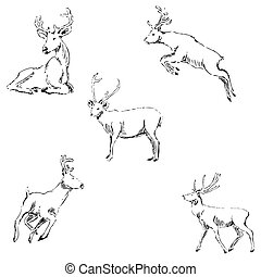 Deer sketch. Pencil drawing by hand