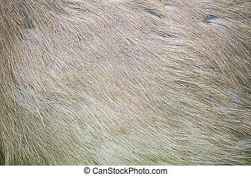 Deer skin texture. - Image of deer skin texture background.