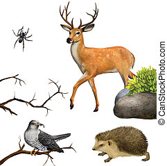 Deer, spider. hedgehog, cuckoo on a tree branches. Isolated realistic illustration on white background