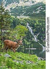 Deer stag on lake edge with high mountains on back