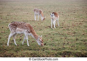 deer,
