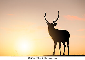 Deer Stag with sunset